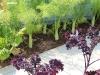 edible_garden_design_at_rhs_tatton_park_06