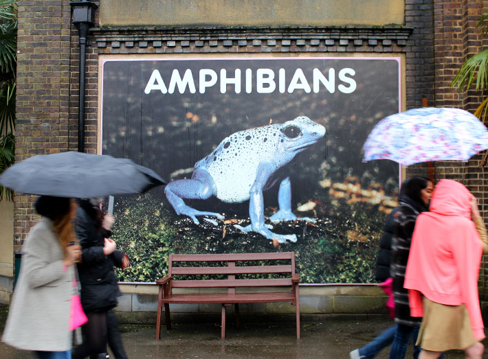 2. The world-renowned ZSL London Zoo Reptile House, zookeeper and animal safety is priority.