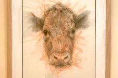 cow_6694
