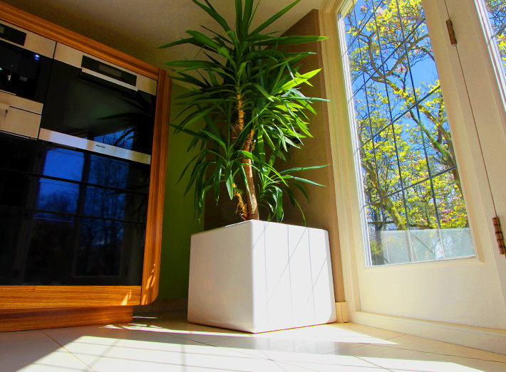 Cube planters are ideal to fit any size of space of garden or interior.