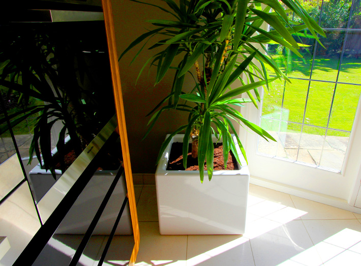 Simple shapes & colour add beauty and value to gardens, meeting areas, showrooms, exhibitions, foyers and lobbies.