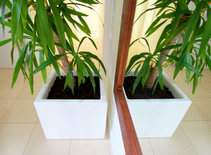 Ideal for architects, landscape gardeners or interior designers looking to create impact.
